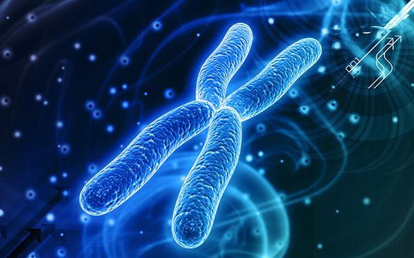 3d model hromozoma